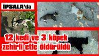 İPSALA'DA 12 KEDİ VE 3 KÖPEK ZEHİRLİ ETLE ÖLDÜRÜLDÜ