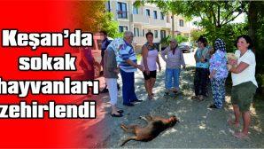 MAHALLE SAKİNLERİNDEN BÜYÜK TEPKİ!