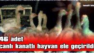46 ADET CANLI KANATLI HAYVAN ELE GEÇİRİLDİ