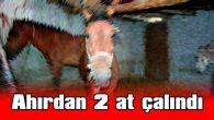 AHIRDAN 2 AT ÇALINDI