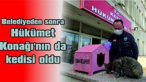 'GARİP' İSİMLİ KEDİ HÜKÜMET KONAĞI'NIN MASKOTU OLDU