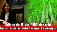 EDİRNE'DE 8 BİN 400 DEKARLIK TARIM ARAZİSİ SULU TARIMA KAVUŞUYOR