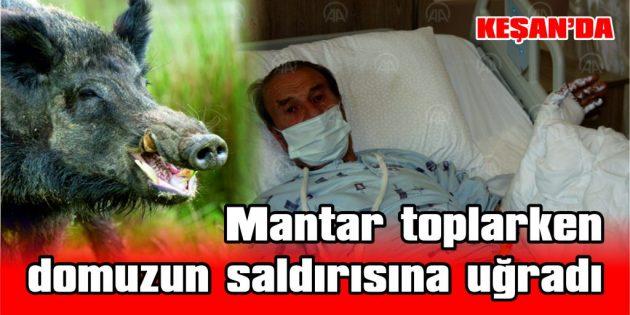 ORMANDA DOMUZUN SALDIRDIĞI YAŞLI ADAM YARALANDI