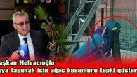 """HELVACIOĞLU: """"CHP YÖNETİCİSİNE 500 FİDAN DAĞITARAK CEVAP VERİYORUZ"""""""