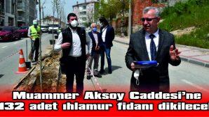 MUAMMER AKSOY CADDESİ IHLAMUR KOKACAK