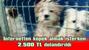 İNTERNETTEN KÖPEK ALMAK İSTERKEN 2.500 TL DOLANDIRILDI