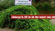 LÜLEBURGAZ'DA 231 BİN KÖK HİNT KENEVİRİ YAKILARAK İMHA EDİLDİ
